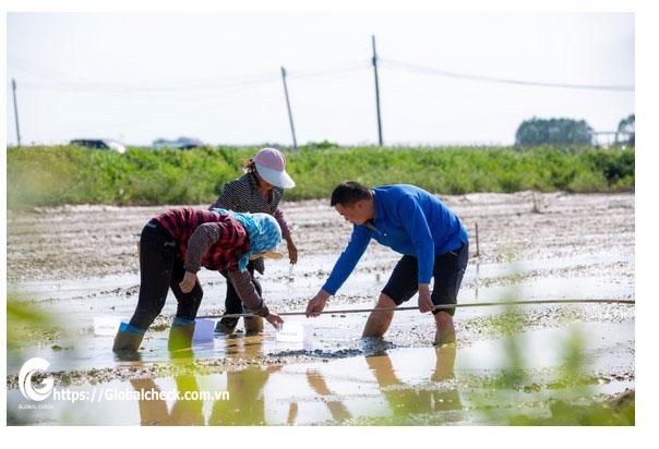Cuộc đấu giữa máy gieo hạt không người láy P – GlobalCheck và gieo hạt thủ công bằng người – Kết quả sẽ ra sao?