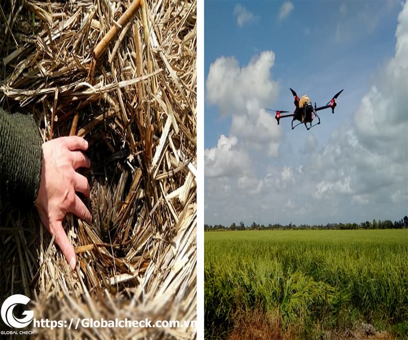 Máy bay P – Globalcheck phương pháp tạo lớp phủ thực vật tự nhiên trong canh tác sản xuất nông nghiệp.