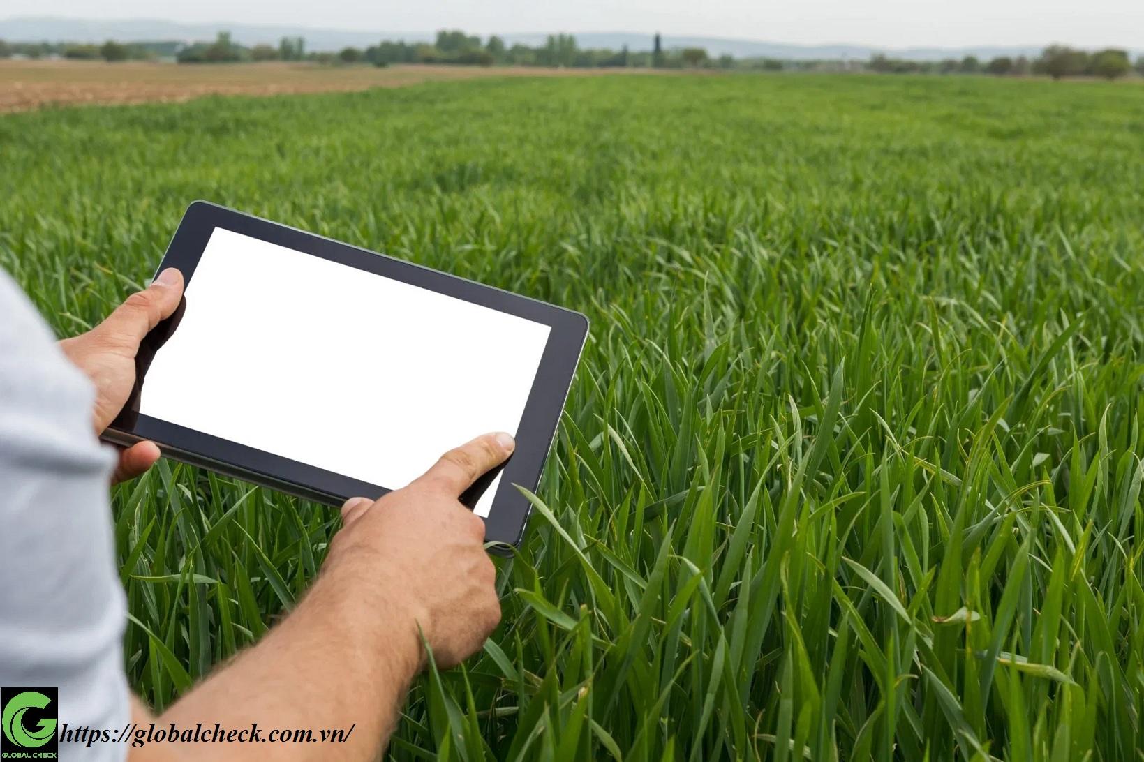 Kỹ thuật trồng lúa 4.0 là gì