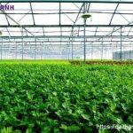trang trại hữu cơ tại việt nam