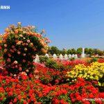Cách phun thuốc sâu cho hoa hồng hiệu quả