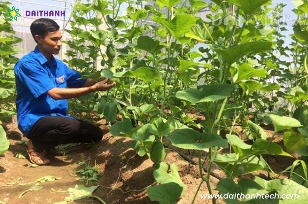 Người trẻ đam mê nông nghiệp ứng dụng công nghệ 4.0 vào sản xuất