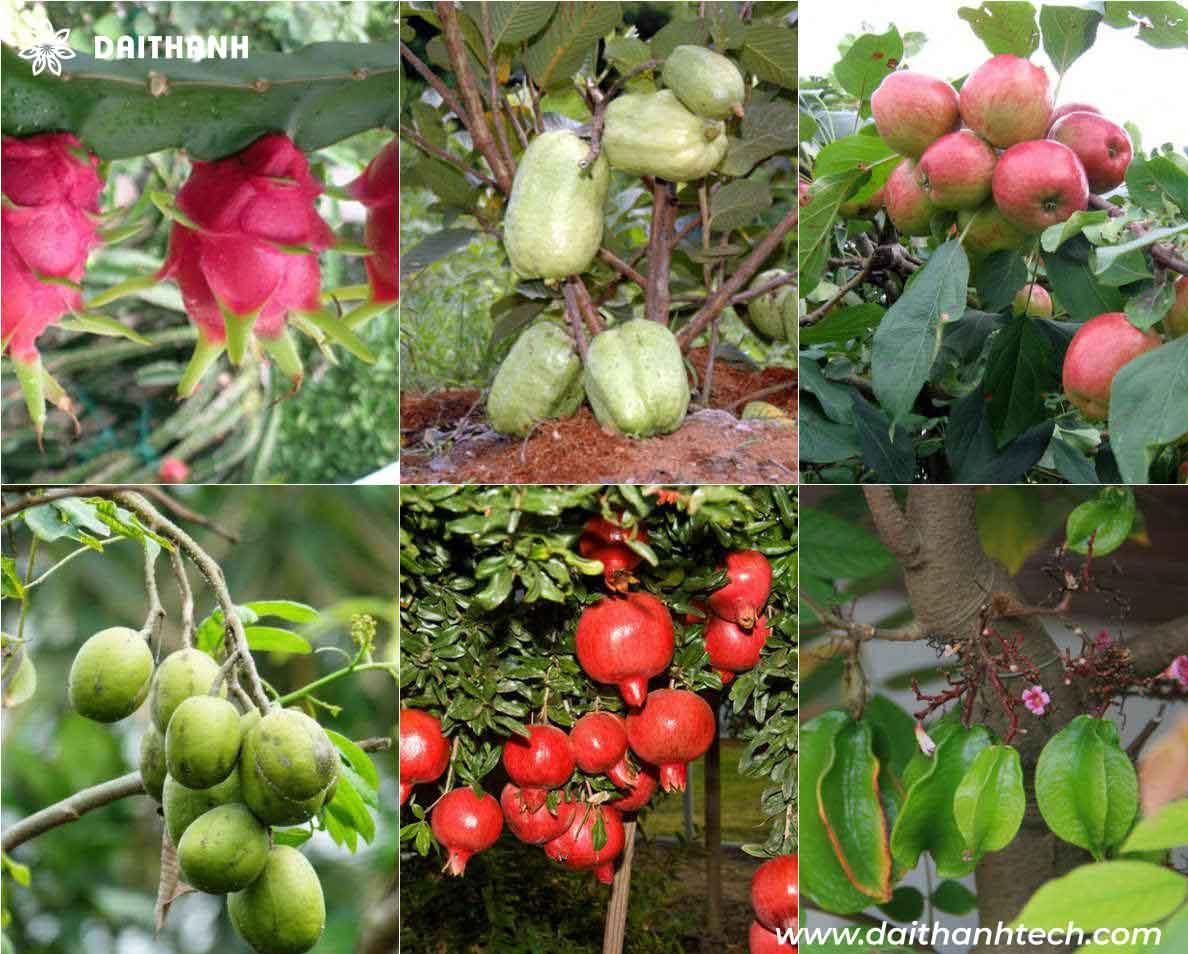 Nguyên tắc trồng và chăm sóc cây ăn quả đảm bảo an toàn vệ sinh thực phẩm